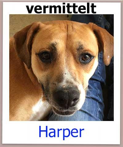 Harper Tierschutz Zypern Hund vermittelt 1