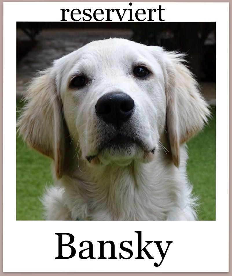 BanskyPro-reserviert