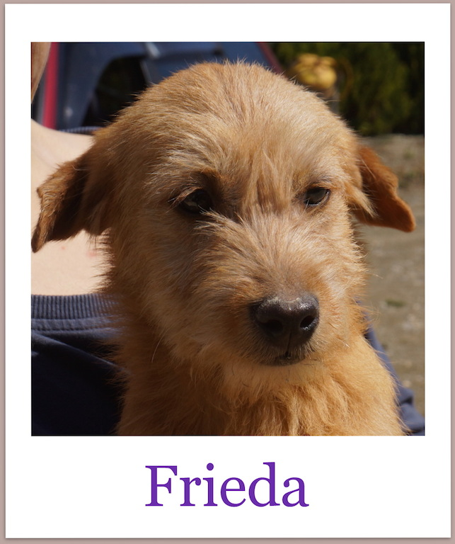 FriedaPro