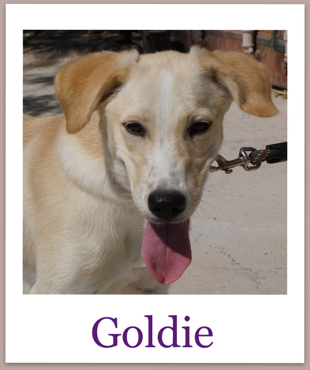 GoldieProfil