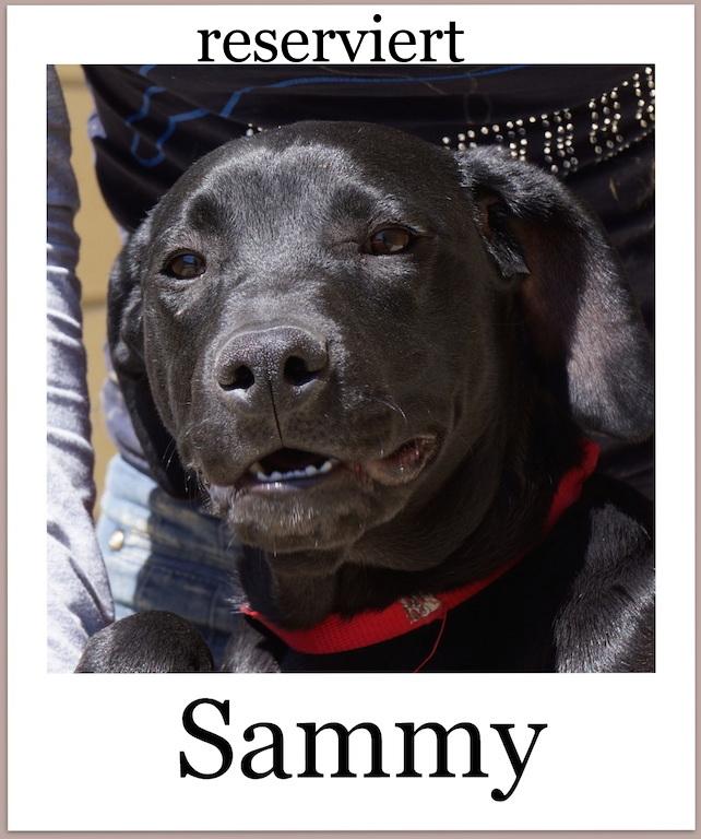 SammyProneu2 reserviert
