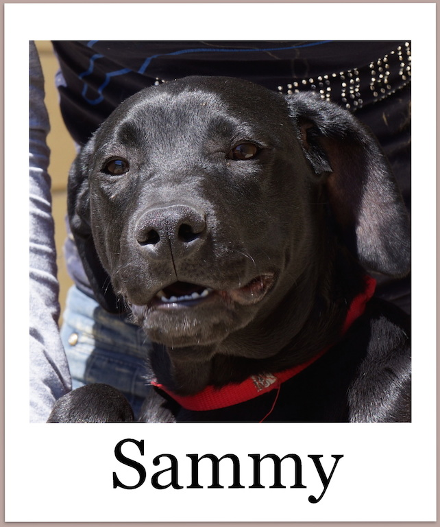 SammyProneu2