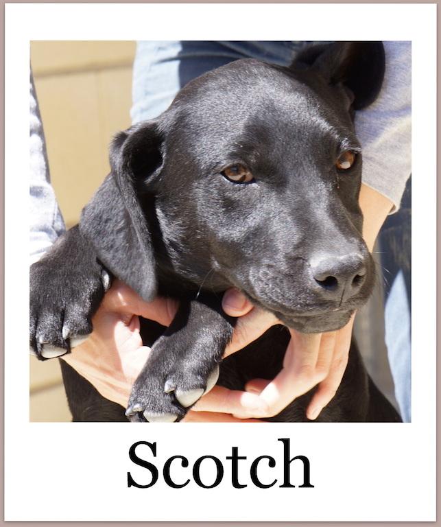 ScotchProneu2