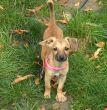 Beanie-Hundin-Tierschutz-Pflegestelle-6