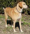 Mischling-Hund-Zypern-Tierheim-28