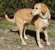 Mischling-Hund-Zypern-Tierheim-30