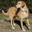 Mischling-Hund-Zypern-Tierheim-31