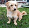 Terrier-Pflegestelle-Hund-vermittlung-08