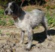 Terrier-Hündin-Leishmaniose-Tierschutz-Zypern-01