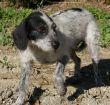 Terrier-Hündin-Leishmaniose-Tierschutz-Zypern-03