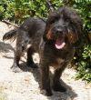 Terrier-Hündin-TierheimZypern-02