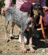 Pointer-Huendin-Zypern-Tierschutz-94