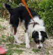 Mischling-Rüde-Tierschutz-Zypern-03