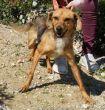 Mischling-Junghund-Zypern-Tierheim-90