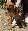 Mischling-Junghund-Zypern-Tierheim-99