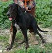 Mischling-Rüde-groß-TierschutzZypern-3