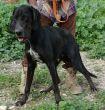 Mischling-Rüde-groß-TierschutzZypern-4
