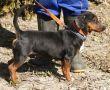 Dackel-Hündin-Zypern-Tierschutz-20