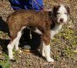 Hund-Leishmaniose-Zypern-Tierheim-00