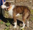 Hund-Leishmaniose-Zypern-Tierheim-06
