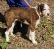 Hund-Leishmaniose-Zypern-Tierheim-12