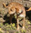 Hund-Mischling-Zypern-Tierheim-88