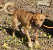 Hund-Mischling-Zypern-Tierheim-90